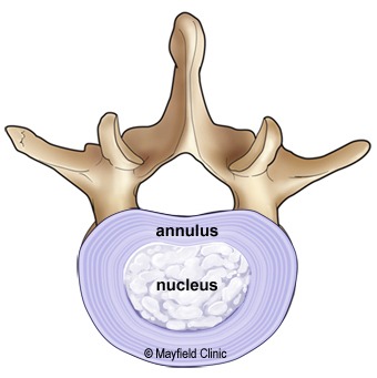 Illustration of intervertebral disc