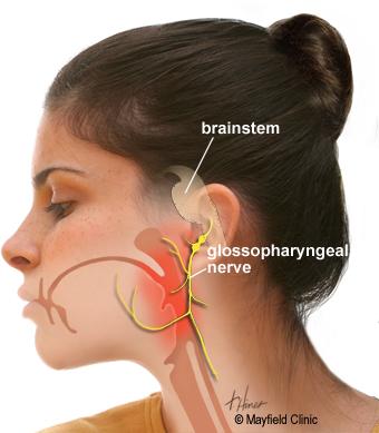 anatomy glossopharyngeal